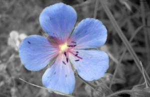 Красивый синий цветок
