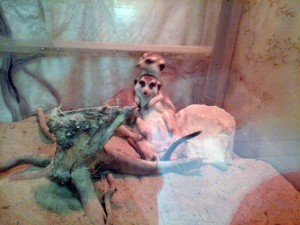 Екатеринбург зоопарк
