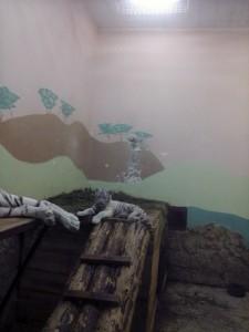 Екатеринбург бенгальский белый тигренок
